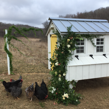 Chicken Coop DIY Project